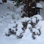 Jak se starat o zahradu, když chybí sníh a pořádná zima