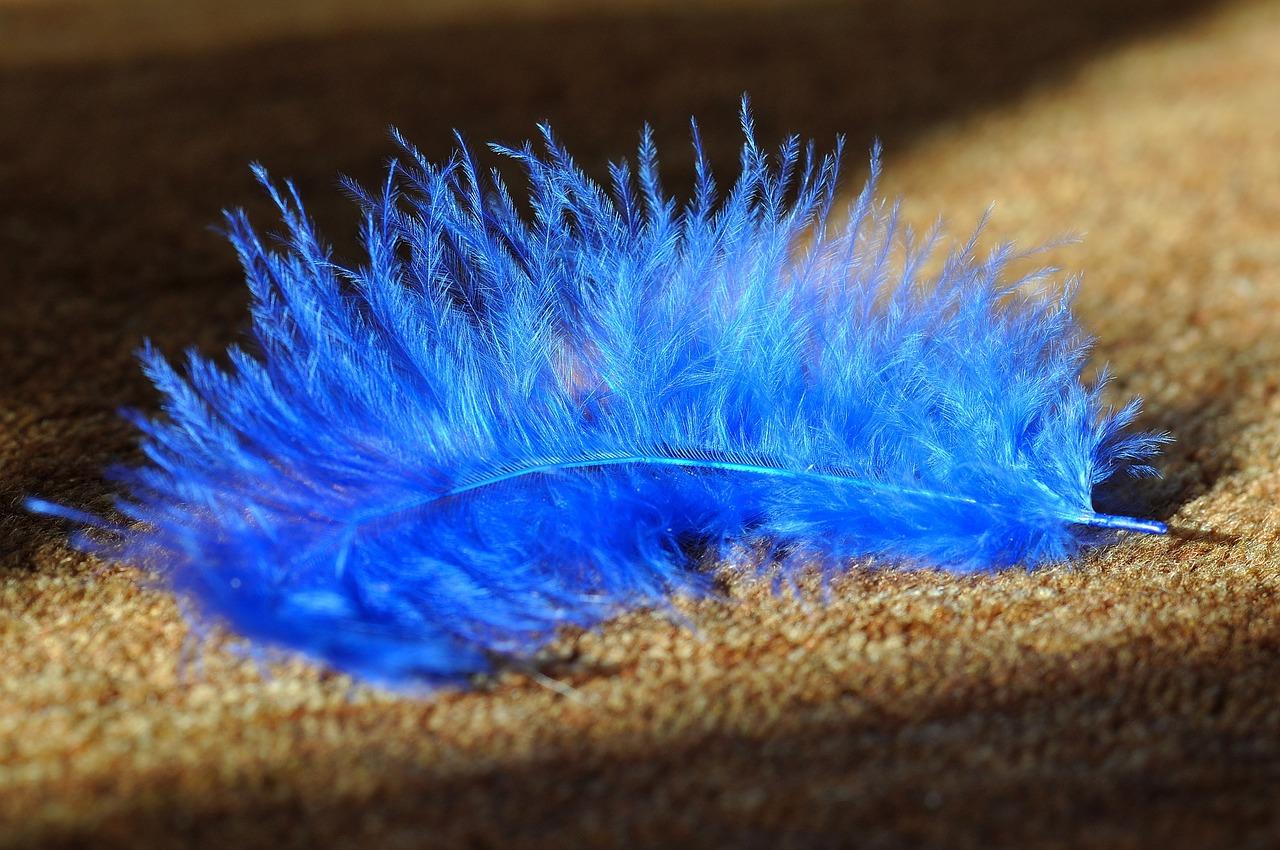 Vybírejte koberce online podle barev a délky vlasu